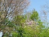 20110408-17德盧比荷(景):P1030306.jpg