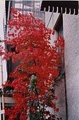 061022-29Japan:File02590.jpg