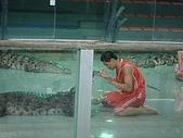 090520泰國旅遊2-曼谷+芭達雅:003鱷魚秀 (1).jpg