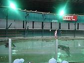090520泰國旅遊2-曼谷+芭達雅:003鱷魚秀 (2).jpg