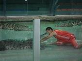 090520泰國旅遊2-曼谷+芭達雅:003鱷魚秀 (3).jpg