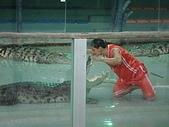 090520泰國旅遊2-曼谷+芭達雅:003鱷魚秀 (4).jpg