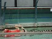 090520泰國旅遊2-曼谷+芭達雅:003鱷魚秀 (5).jpg