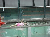 090520泰國旅遊2-曼谷+芭達雅:003鱷魚秀 (6).jpg