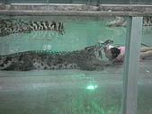 090520泰國旅遊2-曼谷+芭達雅:003鱷魚秀 (7).jpg