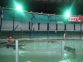 090520泰國旅遊2-曼谷+芭達雅:003鱷魚秀.jpg