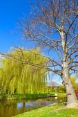 基督城雅芳河:紐西蘭雅芳河 (6).jpg