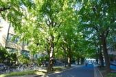 東京大學:東京大學 (5).jpg