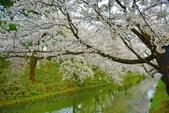 弘前公園(2):弘前公園2 (19).jpg