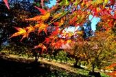 楓葉:A020.jpg