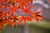 槭紅太平山:S021.jpg