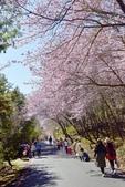 武陵農場:2021.02 (21).jpg