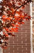 槭紅太平山:S010.jpg