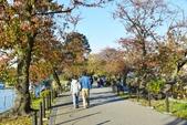 上野公園&不忍池:不忍池 (4).jpg