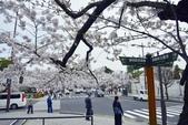 弘前公園(2):弘前公園2 (4).jpg