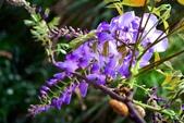 浪漫紫藤花園:A034.jpg