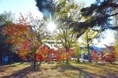 河口湖&八木崎公園:八木崎公園 (8).jpg