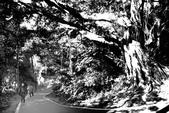 黑與白的健行:爬山黑與白 (13).jpg