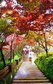 槭紅太平山:S013.jpg