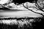 黑與白的健行:爬山黑與白 (15).jpg