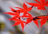槭紅太平山:S014.jpg