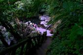 陽明山健行趣:A014.jpg