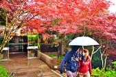 槭紅太平山:S015.jpg
