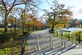 上野公園&不忍池:不忍池 (2).jpg