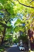 東京大學:東京大學 (17).jpg