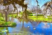基督城雅芳河:紐西蘭雅芳河 (19).jpg