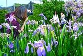 浪漫紫藤花園:A002.jpg