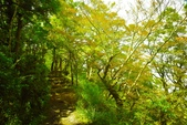 太平山山毛櫸:太平山 (17).jpg