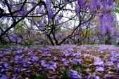 浪漫紫藤花園:A028.jpg