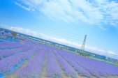 仙草花:仙草花 (9).jpg