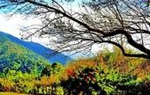 棲蘭山莊遊:A016.jpg