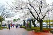 弘前公園(2):弘前公園2 (2).jpg