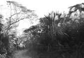 黑與白的健行:爬山黑與白 (5).jpg
