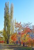 河口湖&八木崎公園:八木崎公園 (3).jpg