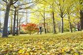 河口湖&八木崎公園:八木崎公園 (15).jpg