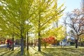 河口湖&八木崎公園:八木崎公園 (19).jpg