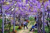 浪漫紫藤花園:A007.jpg