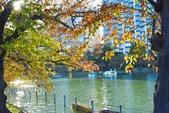 上野公園&不忍池:不忍池 (9).jpg