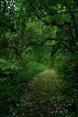 小粗坑步道:小粗坑步道 (6).jpg