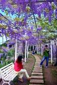 浪漫紫藤花園:A008.jpg
