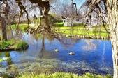 基督城雅芳河:紐西蘭雅芳河 (18).jpg