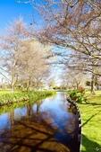 基督城雅芳河:紐西蘭雅芳河 (11).jpg