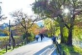 上野公園&不忍池:不忍池 (12).jpg
