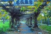 2020.11.武陵農場健行:武陵農場 (12).jpg