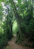 大雪山國家森林公園露營:A012.jpg