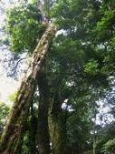 大雪山國家森林公園露營:A015.jpg